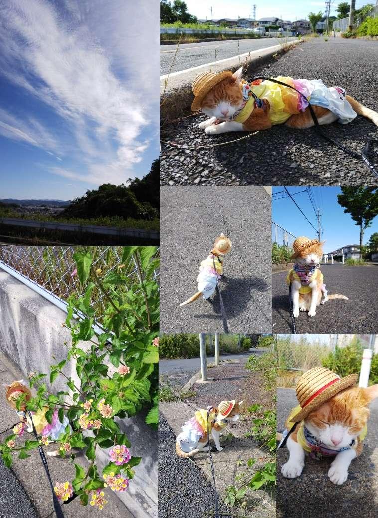 image 散歩♪