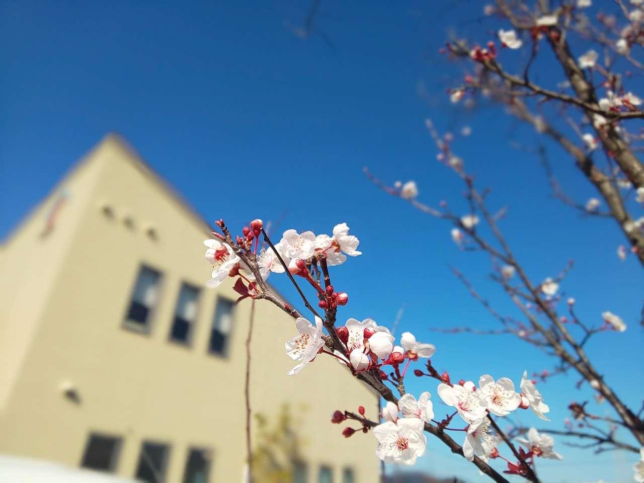 image 春よ来い